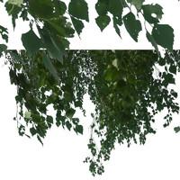 branch9.psd