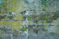 cement mossy 04.JPG