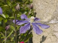 Purple Flower (2-pack)