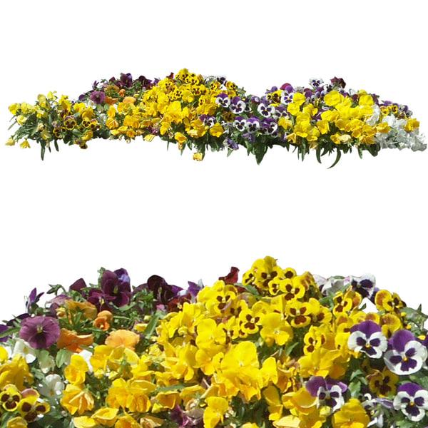 flowers5p.jpg