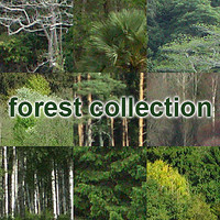 forest collection
