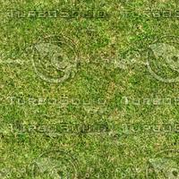 Grass Texture 2