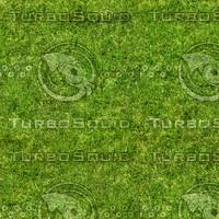 Grass Texture 6