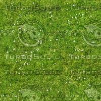 Grass Texture 9