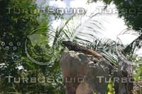 Iguana perch