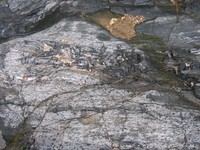Rock Texture - Metamorphic 1