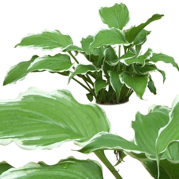 plant2p.jpg
