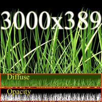 Grass+