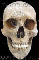 skull 25.jpg