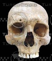skull 26.jpg