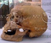 skull 28.jpg
