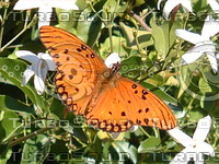 stock_photo_butterfly02_bySentidos.JPG