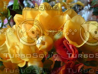 stock_photo_flower03_bySentidos.JPG
