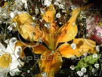 stock_photo_flower05_bySentidos.JPG