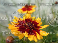 stock_photo_flower14_bySentidos.JPG