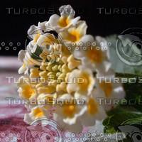 stock_photo_flower22_bySentidos.JPG
