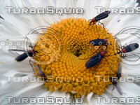 stock_photo_insect03_bySentidos.JPG