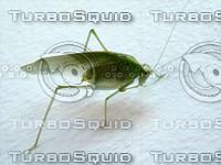 stock_photo_locust02_bySentidos.JPG