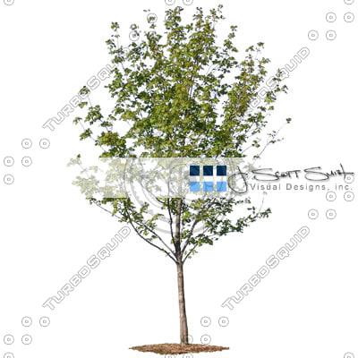 tree-DSCN0159_th.jpg