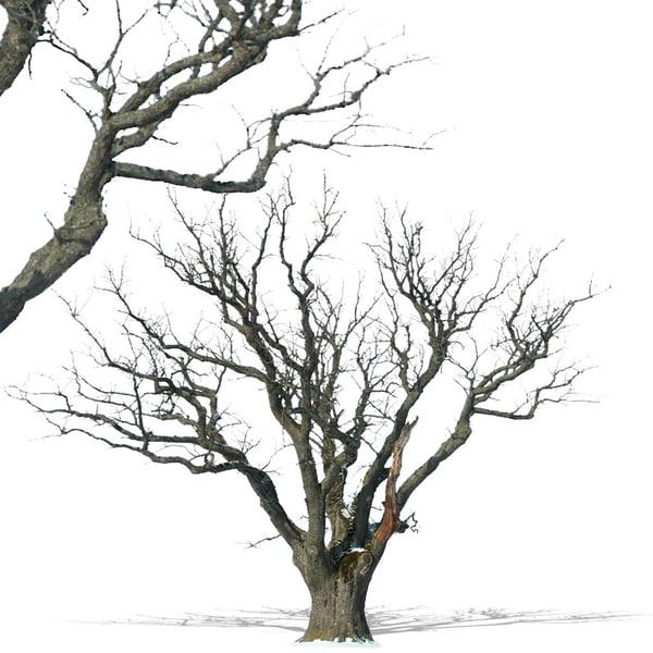 tree28p.jpg