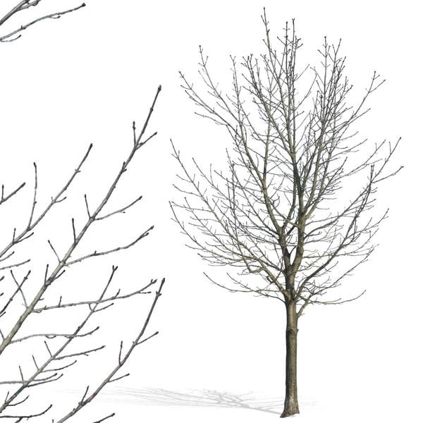 tree30p.jpg