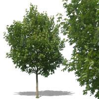 tree31