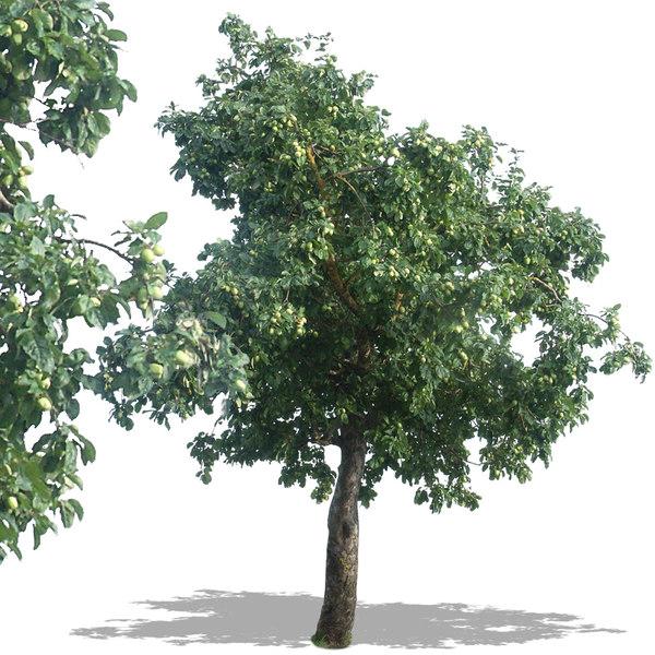 tree34p.jpg