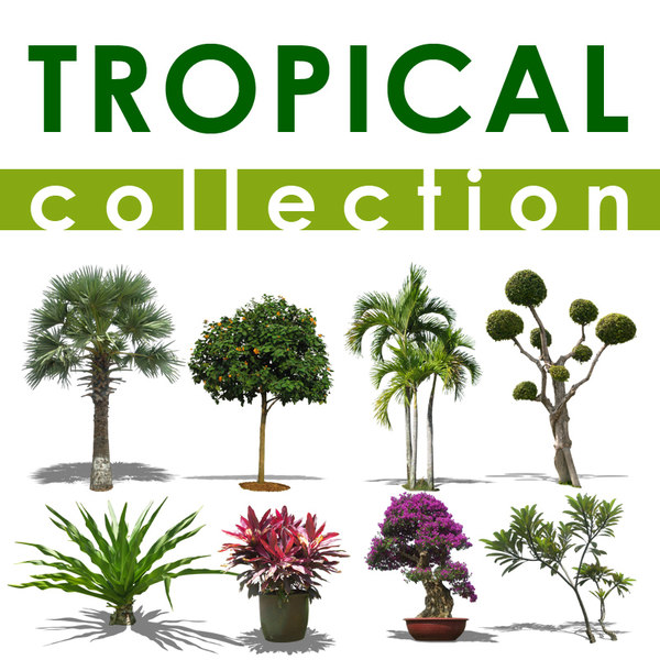 tropical collectionA.jpg