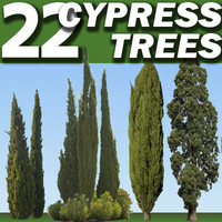 22 Cypress Collection High Resolution
