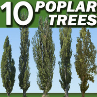 10 Poplar Trees Collection   ----------------------  High Resolution.zip