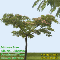 Mimosa Tree - Persian Silk Tree ------------ High Resolution