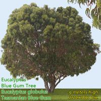 Eucalyptus Globulus Tree -------------------- High Resolution.psd