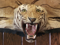 Tiger Textures