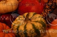 Gourds_5141.jpg