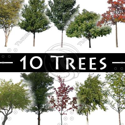 TreePack-01.jpg
