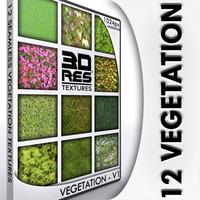 12 Vegetation Textures