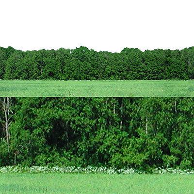 forest09p.jpg