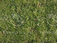 Seamless Grass Texture Pack!!