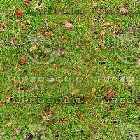 grass_0001_512.jpg