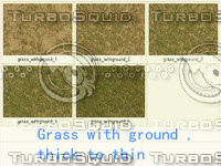 serise grass(5pic)