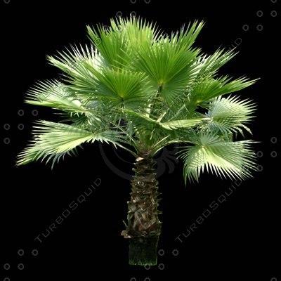 tree-10-t.jpg