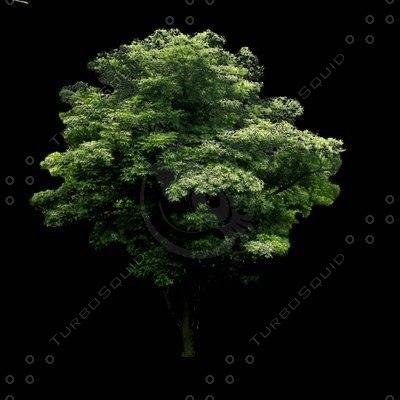 tree-20-t.jpg