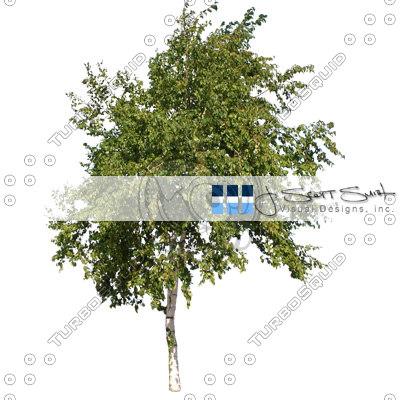 tree-DSCN0365_th2.jpg