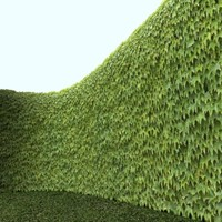 Boston Ivy with Alpha Layer - High Resolution