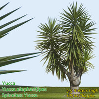 Spineless Yucca  - High Resolution