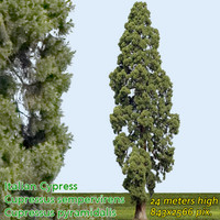 Italian Cypress 24m - High Resolution