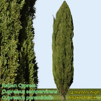 Italian Cypress 14m - High Resolution