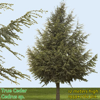 True Cedar Tree Texture ---------------------- High Resolution