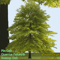 Pin Oak Tree Texture - High Resolution
