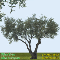 Olive Tree Texture High Resolution